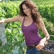 Beautiful woman harvesting grapes — Stock Photo