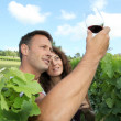 Couple of winegrowers in vineyard - Stock Photo