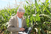 Agronomist in corn field — Stock Photo
