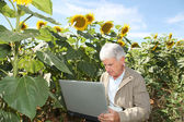 Agronomist in sunflowers field — Stock fotografie