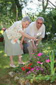 Elderly couple in garden — Stock fotografie