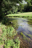 River and vegetation — Stock Photo