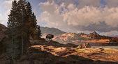Mountain Buffalo — Stock Photo