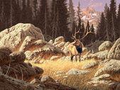 Yellowstone Elk — Stock Photo