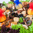 Sea-food mix — Stock Photo