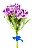 Alstroemeria bouquet isolated over white — Stock Photo