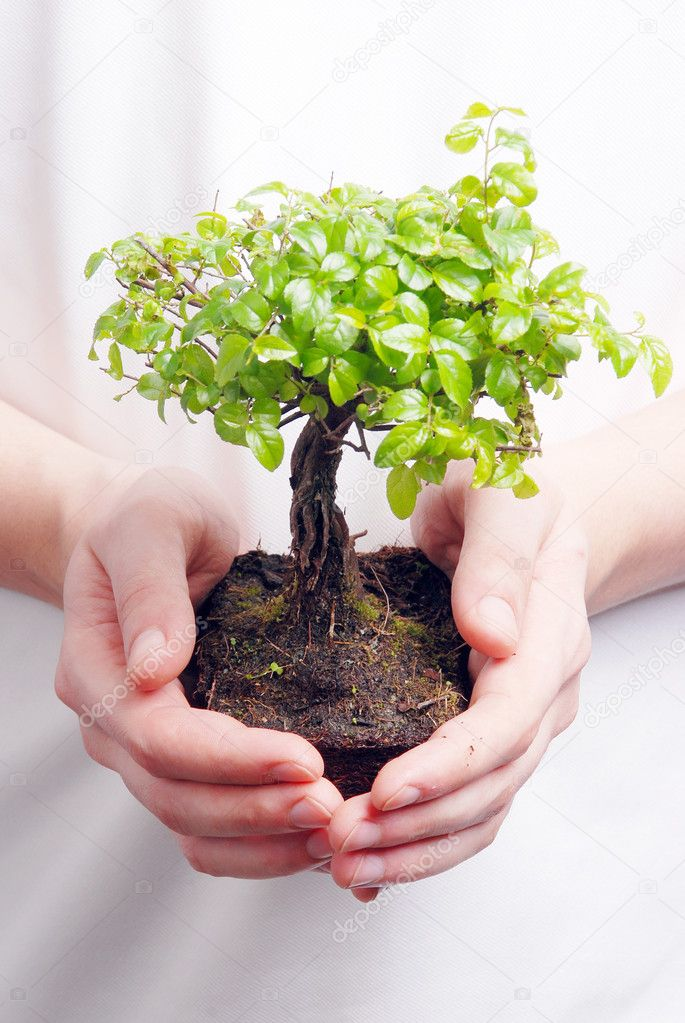Hands holding a Bonsai tree high resolution image — Stock Photo #5669846