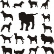 Silhouettes of different breeds of dogs — Stock Vector