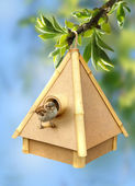 Birdie and birdhouse — Stock Photo