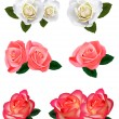 Set of a beautiful roses on a white background. Vector. — Stock Vector #5714721