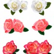 Big set of a beautiful roses. Vector. - Stock vektor