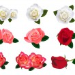 Beautiful roses on a white background. Vector. — Vector de stock