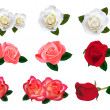 Beautiful roses on a white background. Vector. - Imagens vectoriais em stock