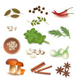 Group of spices. Vector. — Stock Vector