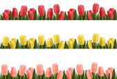 Tree flower design borders isolated on white. Vector. — Stock Vector