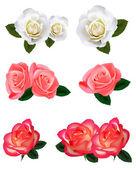 Gran juego de una hermosas rosas. vector. — Vector de stock