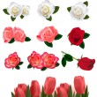Set of a beautiful roses on a white background. Vector. — Stock Vector #5752387