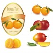 Three yellow label with different sorts of fruit. Vector. — Stock Vector