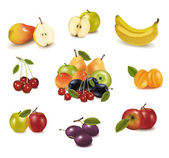 Group with different sorts of fruit. Vector. — Stock Vector