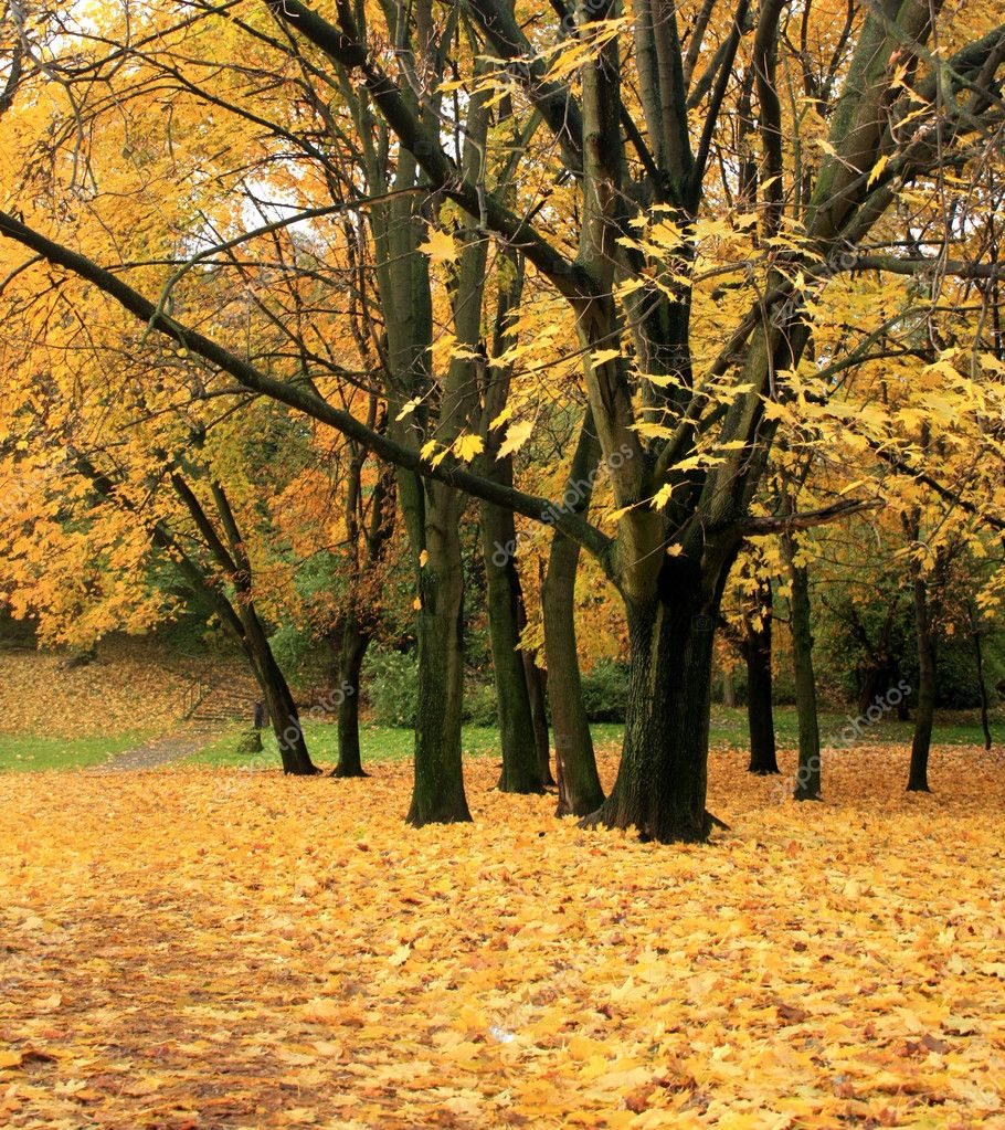 Autumn park — Stock Photo #6071140