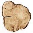 Tree trunk cut - Stock Photo