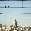 Galata Tower and Birds on Wire — Stock Photo #5719802