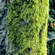 Green algae texture on a tree body - Stock Photo
