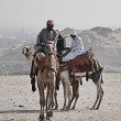 Camel Riders - Foto Stock