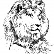 Lion Drawing - Stock Vector