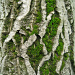 Stock Photo: Moss on tree bark