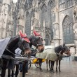 Horse carriage in Vienna, Austria — Stock Photo #5719629