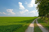 Road along lucerne field — Stock Photo