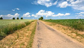 Country road among corn and wheat fields — Stock Photo
