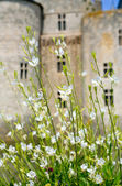 White flowers in front of medieval castle — Stock Photo