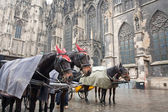 Horse carriage in Vienna, Austria — Stock Photo