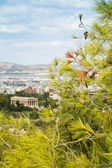 背景にアテネと松の枝 — ストック写真