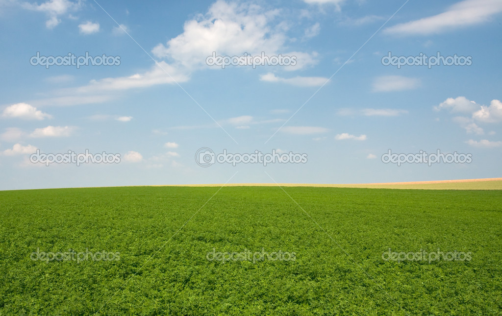 Green lucerne field under blue sky in France — Stock Photo #5718887