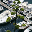 White yachts in summer day — Stock Photo #5720002