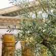 Olive tree and temple column on background — Stock Photo