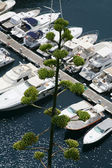 White yachts in summer day — Stock Photo
