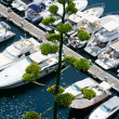 White yachts in summer day — Stock Photo #5788992