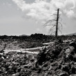 Stock Photo: Burned dead pines in black clinker flow on Etna