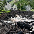 Black lava flow on green slope of Etna — Stock Photo #6279600