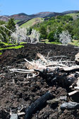 Black lava flow on green slope of Etna — Stock Photo