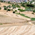公墓和在西西里岛的耕地的理由 — 图库照片