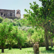 Orange trees near walls of medieval church in Sicily - Foto Stock