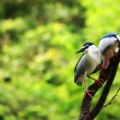 Night Heron - Stock Photo