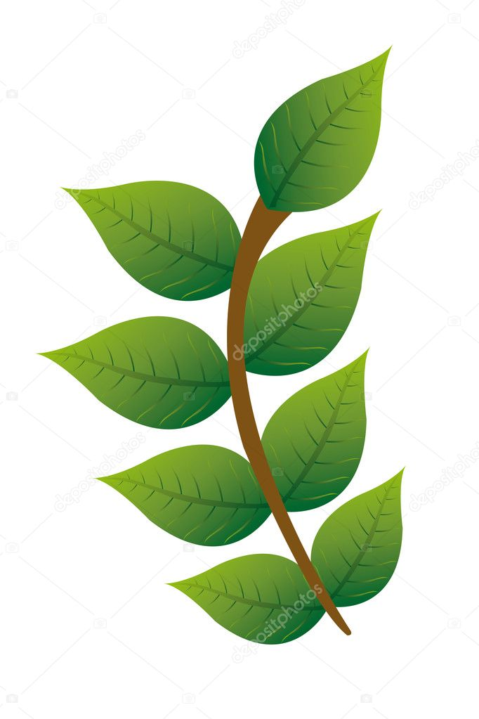 Green and brown branch isolated over white background. Illustration   Stock Vector #6113934
