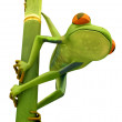 Tree frog on bamboo bole isolated - Stock Photo
