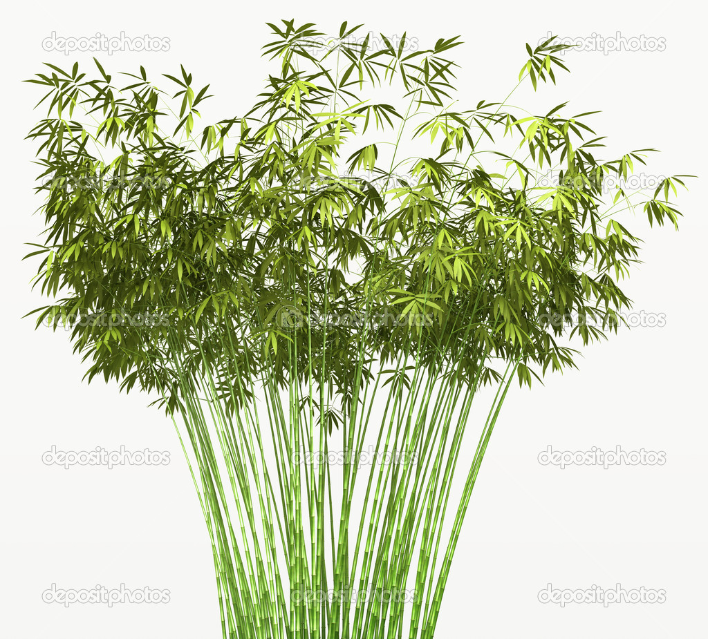Bamboo bush or tangle isolated over white background  — Stock Photo #6542911